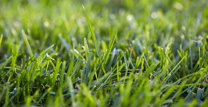 100% all natural lawn care high profile green solution services