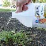 All-natural homemade weed killer recipe